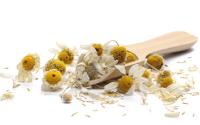 Chamomile – More than Just a Tea
